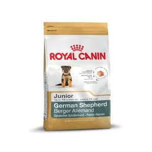 RC BERGER ALLEMAND CHIOT 13,6 KG